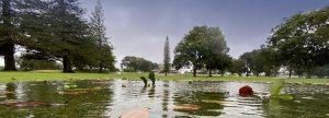 rain on the fairway at Tweed Heads Golf Club
